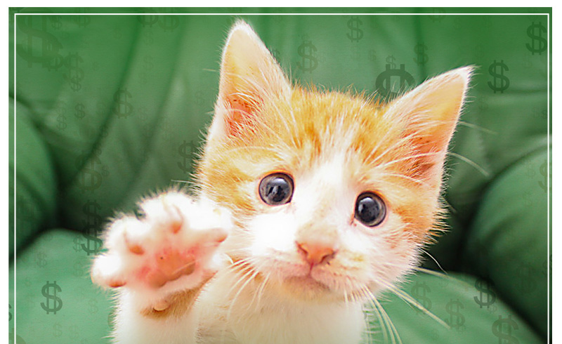 Kitten reaching up with paw